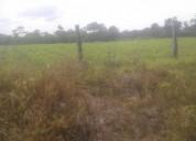 6 hectareas en guácimo