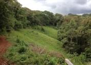 Finca 93 ha reforestada recibo propiedad teca melina cedro amarillon en alajuela