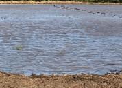 Parcela siembra canal sur riego arenal tempisque falconiana en liberia