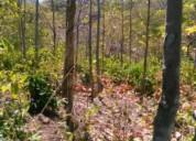 Plantacion de teca en liberia