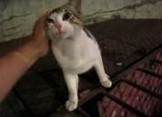 Gato en adopcion regalo gatito jugueton para regal