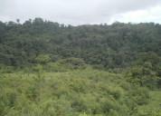 Venta de finca de 299 hectareas en upala